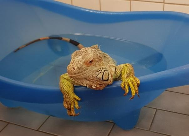 Katla i badet